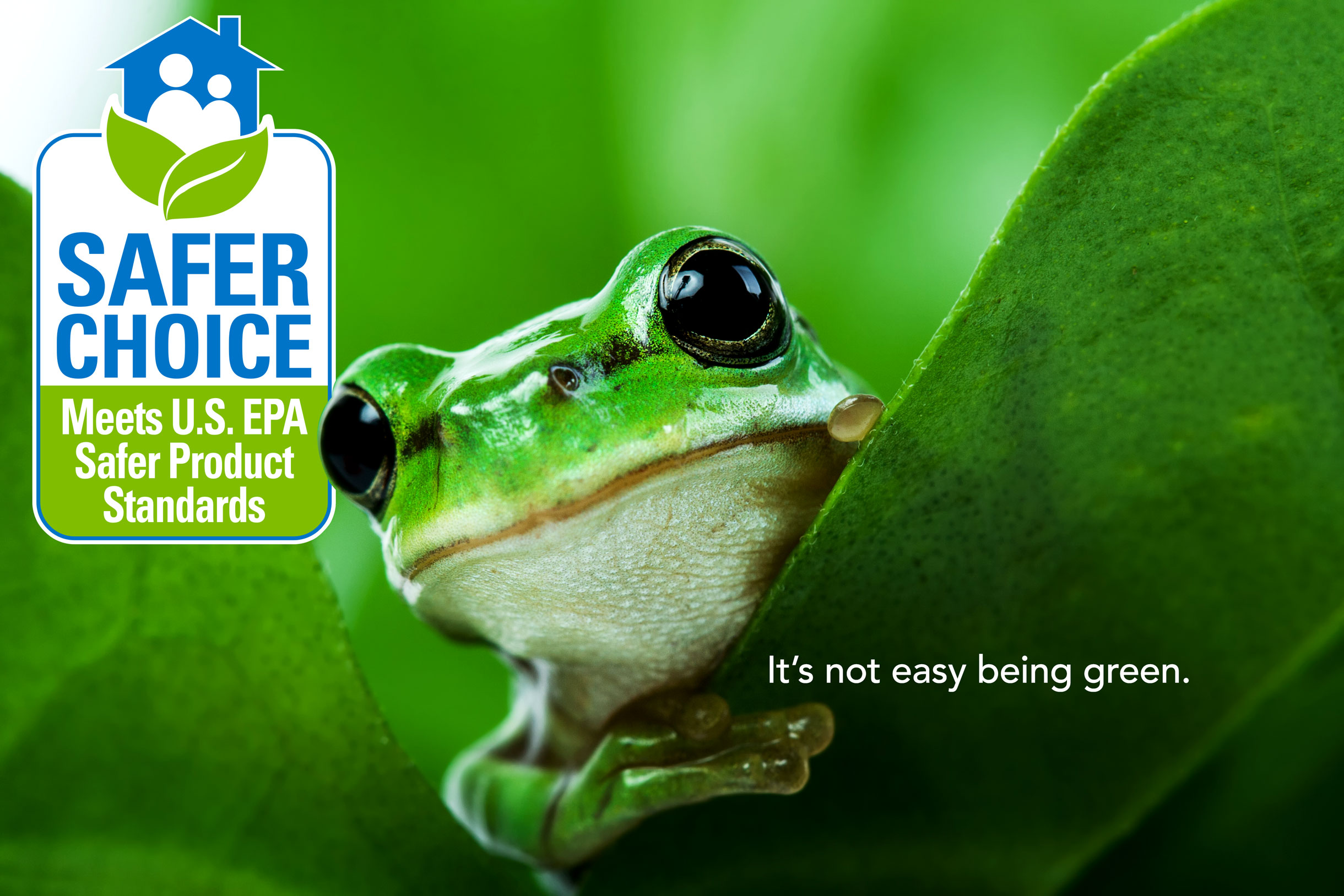 Kermit the Frog Was Right: It's Not Easy Being Green, but It's the Right Choice for Your Business